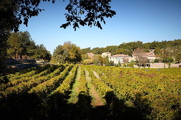 Виноградники Анджелины Джоли и Брэда Питта в Провансе