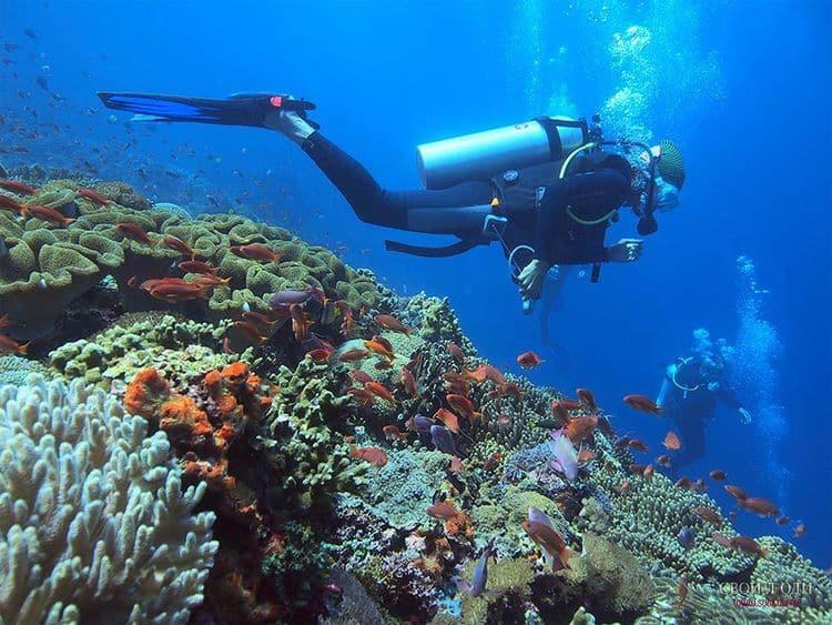 daiving snorkling v indonezii