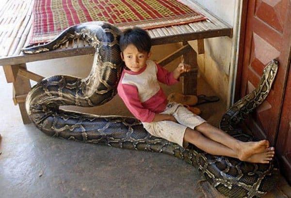 Камбоджийский мальчик со своим другом удавом