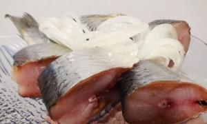 Засолка сельди в домашних условиях рецепты быстро и вкусно