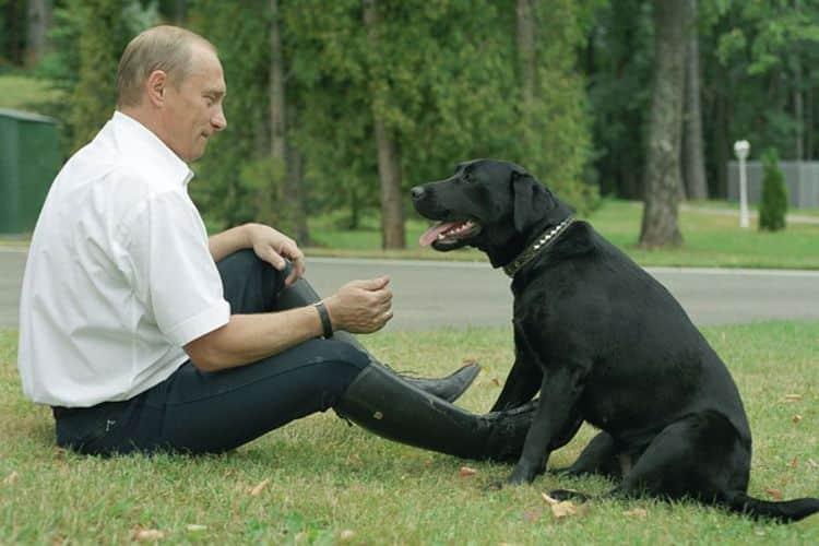Самые дорогие породы собак. Топ-20 (с фотографиями)
